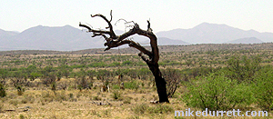 The Hanging Tree on the Mescal movie location property. Photo copyright Mike Durrett 2003-2004, all rights reserved.